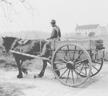cart_horse_old_sol_lumber_co